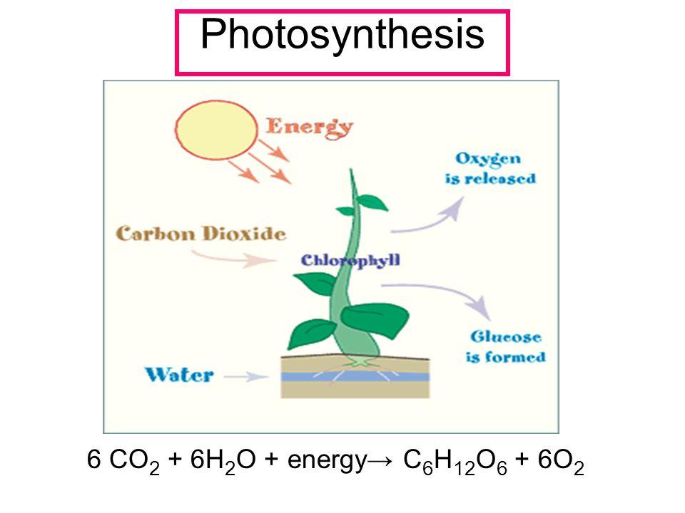Photosynthesis 6 CO 2 + 6H 2 O + energy→ C 6 H 12 O 6 + 6O 2