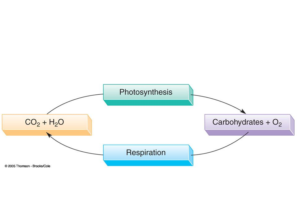 Metabolism Metabolism = The sum of all reactions occurring in an organism –Catabolism – reactions involved in the breakdown of biomolecules; release heat/energy –Anabolism – reactions involved in the synthesis of biomolecules; absorb heat/energy.