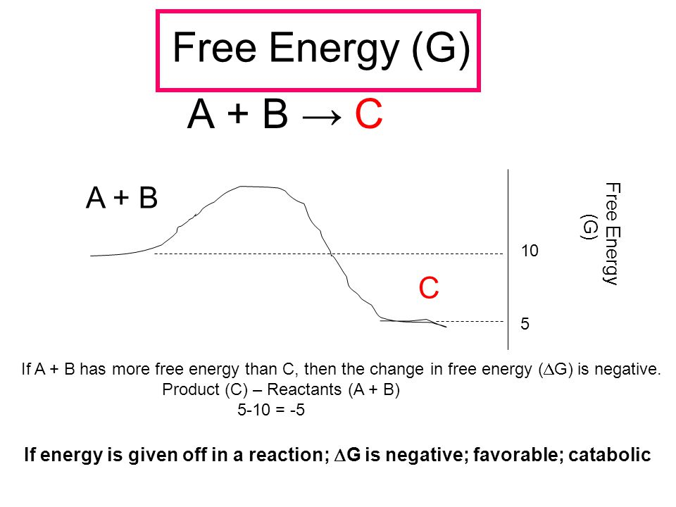 Free Energy (G) A + B → C A + B C Free Energy (G) 5 10 If A + B has more free energy than C, then the change in free energy (  G) is negative. Produc
