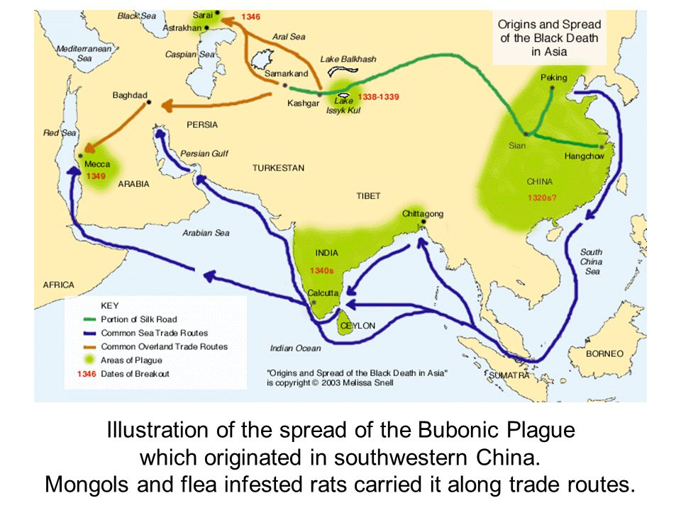 Illustration of the spread of the Bubonic Plague which originated in southwestern China. Mongols and flea infested rats carried it along trade routes.