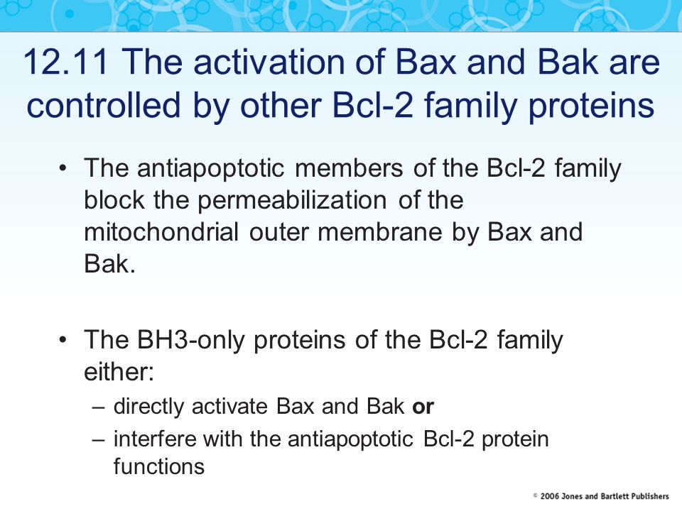 12.11 The activation of Bax and Bak are controlled by other Bcl-2 family proteins The antiapoptotic members of the Bcl-2 family block the permeabilization of the mitochondrial outer membrane by Bax and Bak.