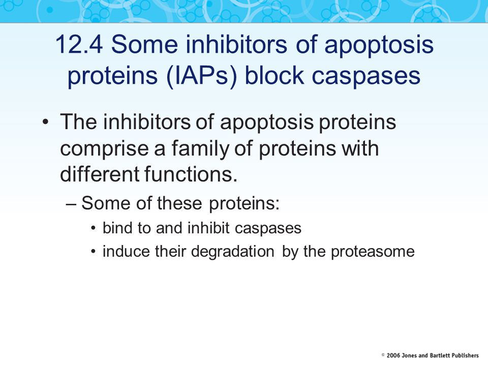 12.4 Some inhibitors of apoptosis proteins (IAPs) block caspases The inhibitors of apoptosis proteins comprise a family of proteins with different fun