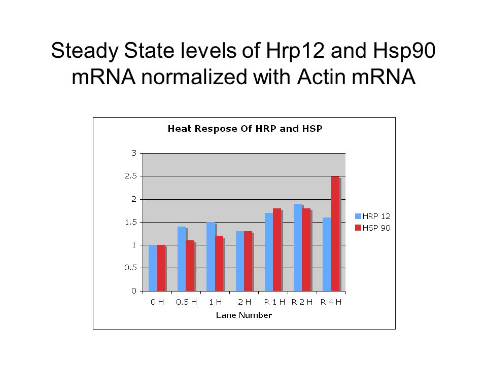 Steady State levels of Hrp12 and Hsp90 mRNA normalized with Actin mRNA