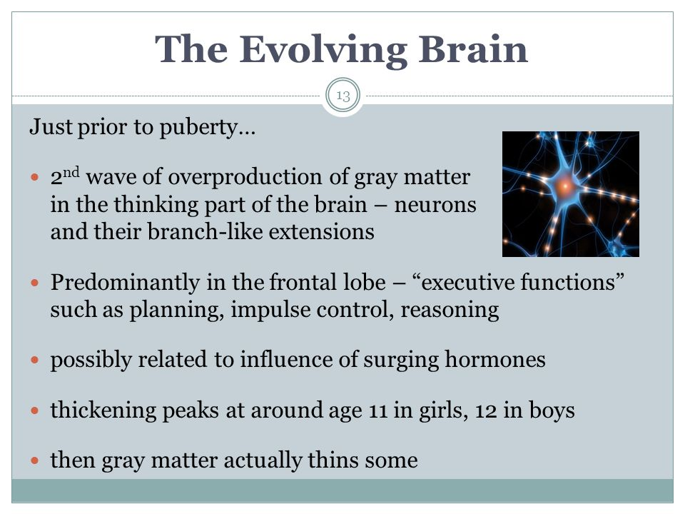 The Evolving Brain 13 Just prior to puberty… 2 nd wave of overproduction of gray matter in the thinking part of the brain – neurons and their branch-l
