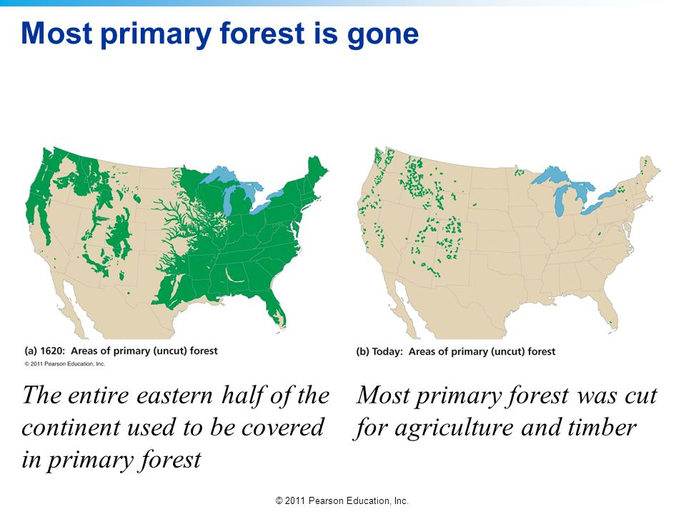 © 2011 Pearson Education, Inc. Most primary forest is gone The entire eastern half of the continent used to be covered in primary forest Most primary