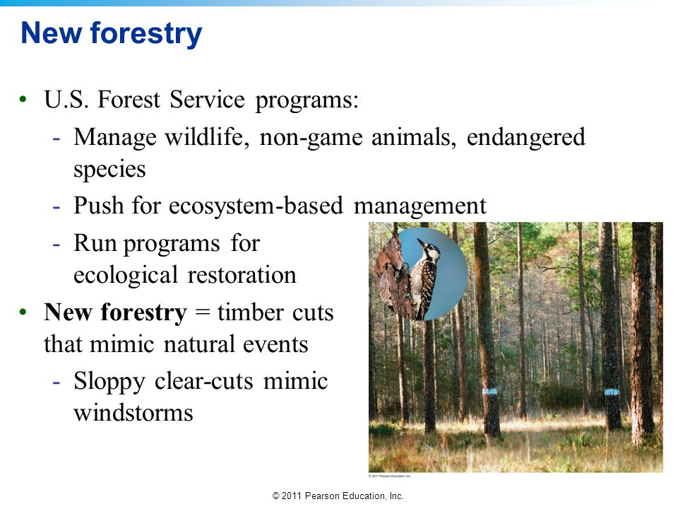 © 2011 Pearson Education, Inc. New forestry U.S. Forest Service programs: -Manage wildlife, non-game animals, endangered species -Push for ecosystem-b