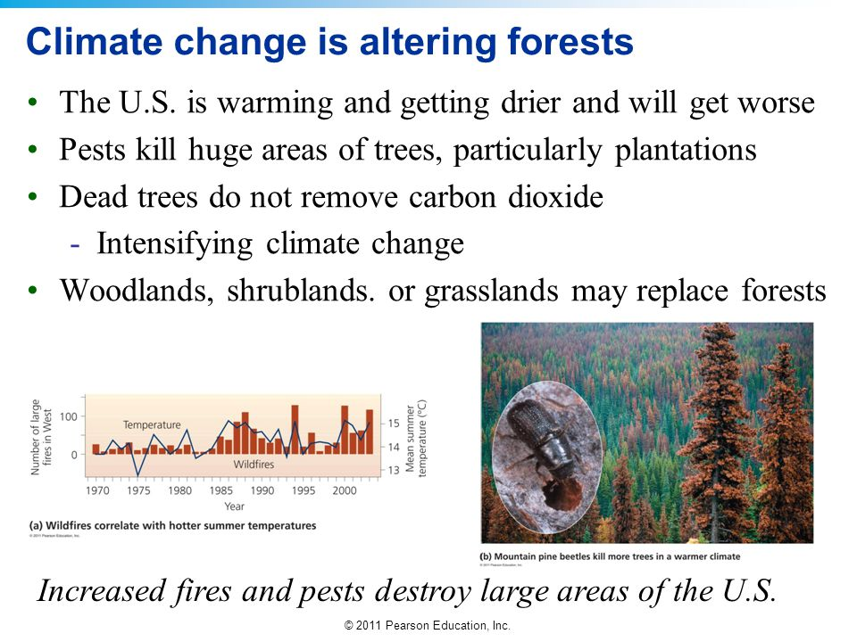 © 2011 Pearson Education, Inc. Climate change is altering forests The U.S. is warming and getting drier and will get worse Pests kill huge areas of tr