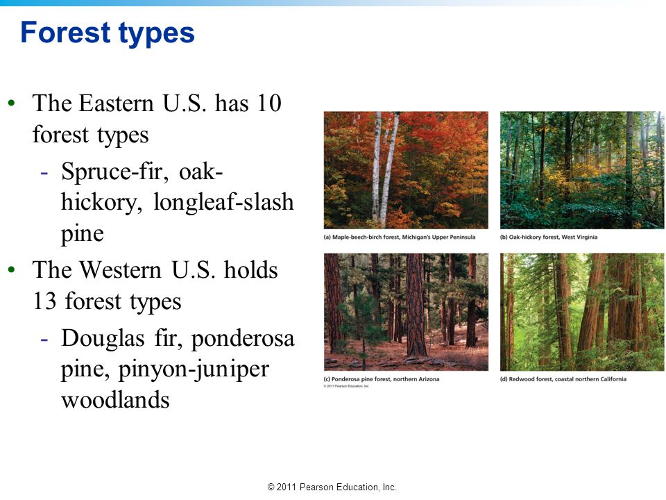 © 2011 Pearson Education, Inc. Forest types The Eastern U.S. has 10 forest types -Spruce-fir, oak- hickory, longleaf-slash pine The Western U.S. holds