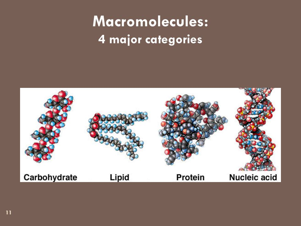 11 Macromolecules: 4 major categories