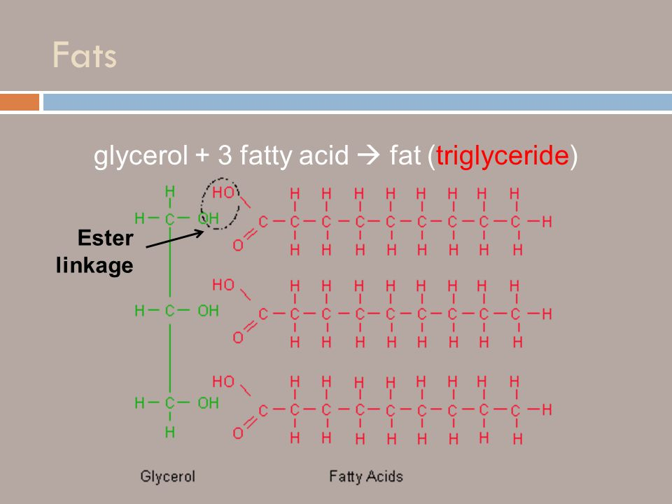 Fats glycerol + 3 fatty acid  fat (triglyceride) Ester linkage