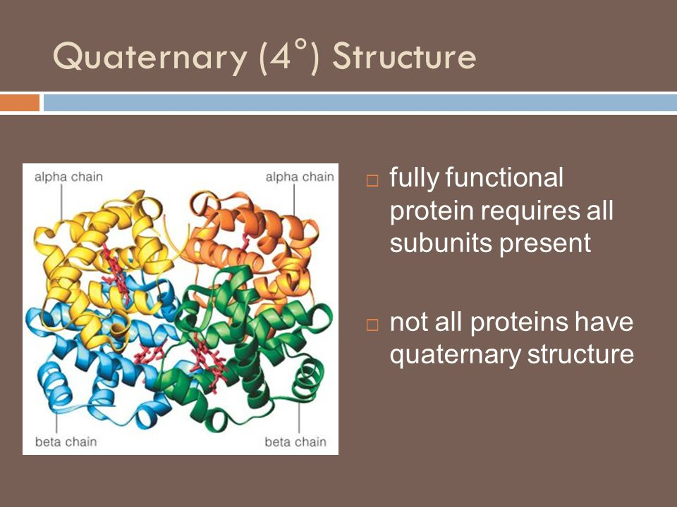 Quaternary (4 ° ) Structure  fully functional protein requires all subunits present  not all proteins have quaternary structure