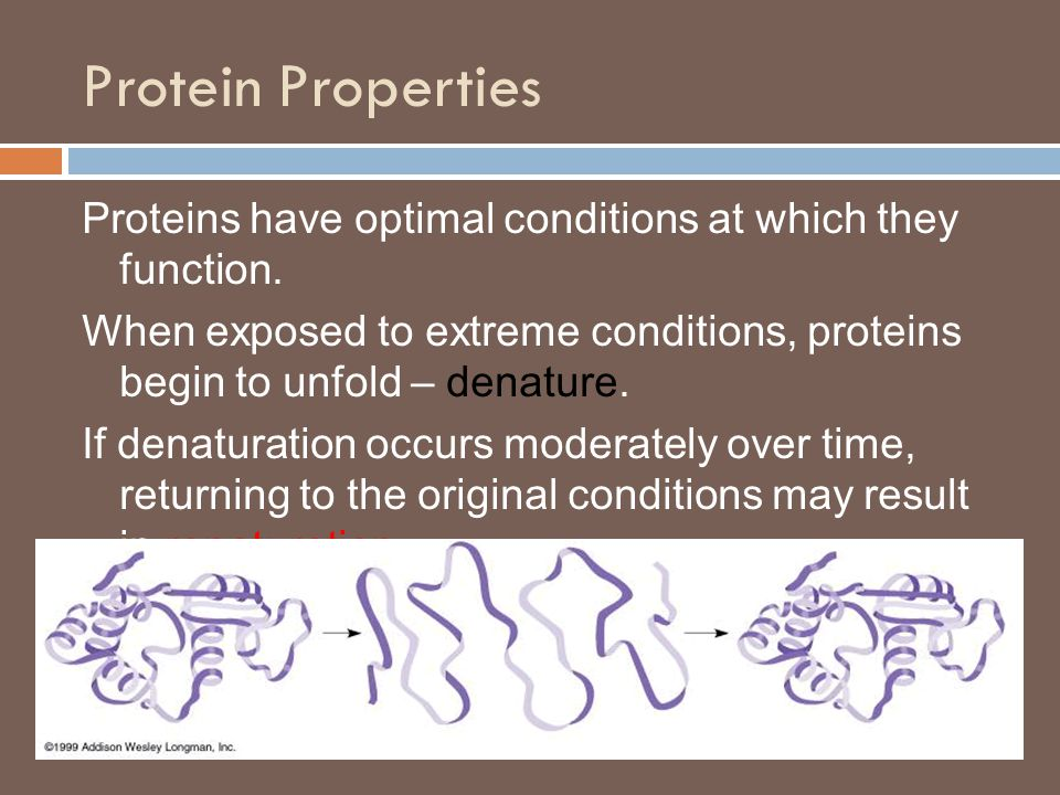Protein Properties Proteins have optimal conditions at which they function.