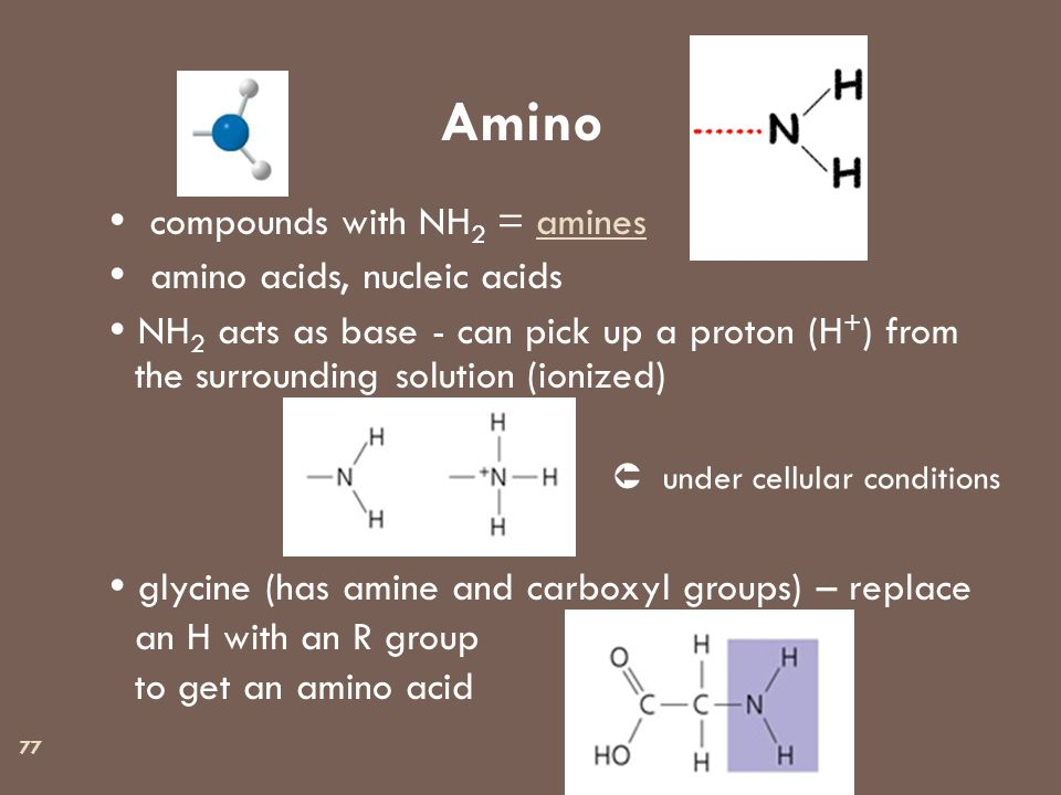 77 Amino  compounds with NH 2 = amines  amino acids, nucleic acids  NH 2 acts as base - can pick up a proton (H + ) from the surrounding solution (ionized)  glycine (has amine and carboxyl groups) – replace an H with an R group to get an amino acid  under cellular conditions