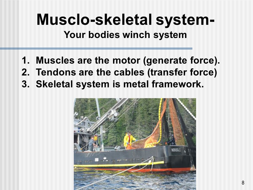 8 Musclo-skeletal system- Your bodies winch system 1.Muscles are the motor (generate force). 2.Tendons are the cables (transfer force) 3.Skeletal syst