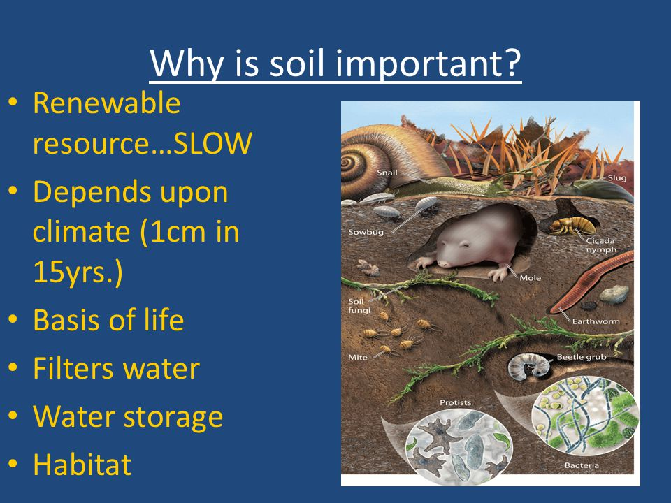 Simplified Soil Food Web