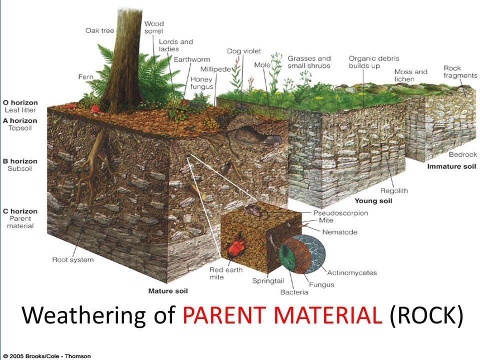 Soil Horizons Soil horizons are distinct layers of soil.