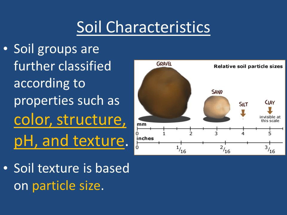 Soil Characteristics Soil groups are further classified according to properties such as color, structure, pH, and texture. Soil texture is based on pa