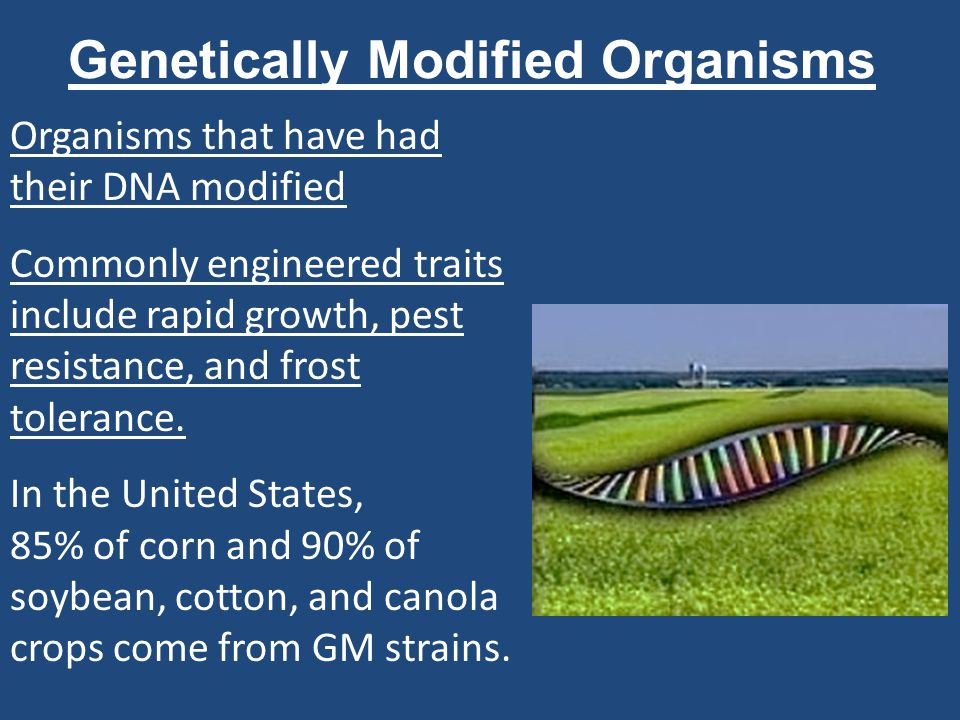 Risks and Benefits of GM Crops Potential for superpests that are resistant to pest- resistant crops Contamination of non-GM plants