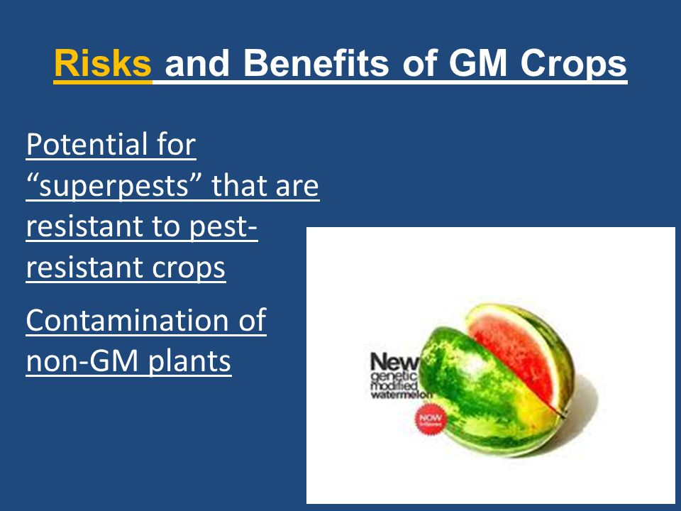 """Risks and Benefits of GM Crops Potential for """"superpests"""" that are resistant to pest- resistant crops Contamination of non-GM plants"""