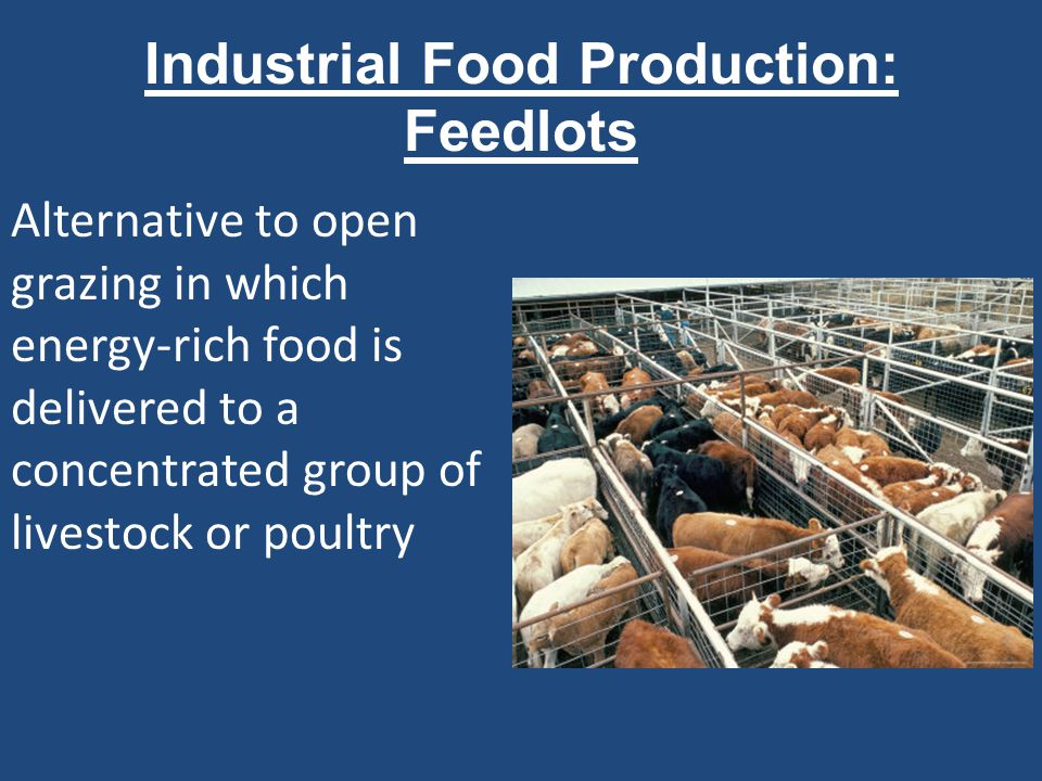 Industrial Food Production: Feedlots Alternative to open grazing in which energy-rich food is delivered to a concentrated group of livestock or poultr