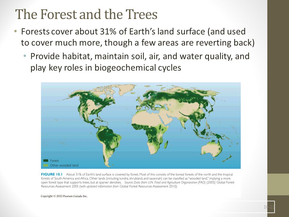 Trees have several basic requirements For photosynthesis to occur An amenable temperature (appropriate to the species) Air (with CO 2 ) Light Proper soil (with certain nutrients) Water (some tree species need more than others) 10-12