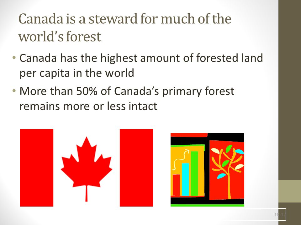 Canada's forests are varied 402 million hectares of forested and other wooded land is 25% of the world's natural forest.