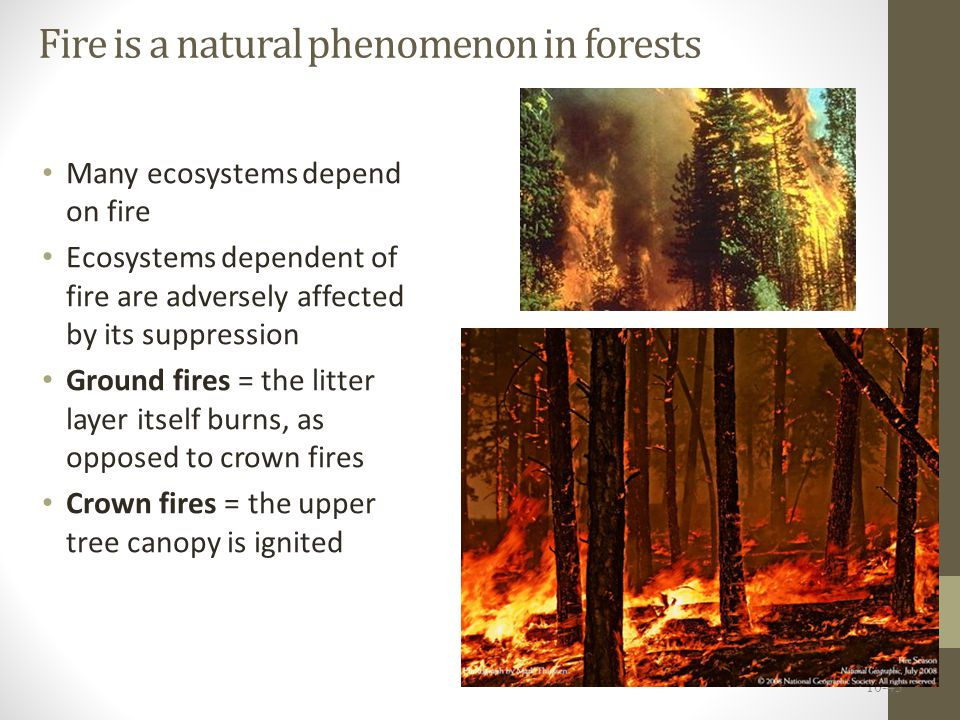 Fire policy has stirred controversy For over 100 years, all forest fires were suppressed But many ecosystems depend on fires Fire suppression allows woody accumulation, which produces kindling for future fires Housing development near forests and climate change will increase fire risk 10-44