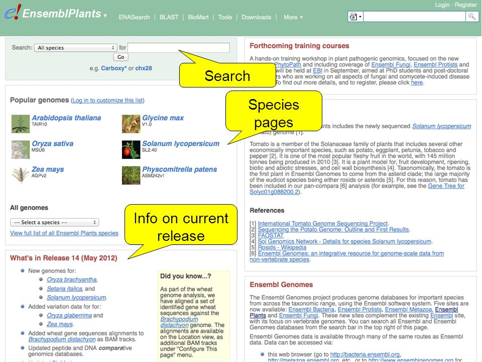 Species pages Info on current release Search