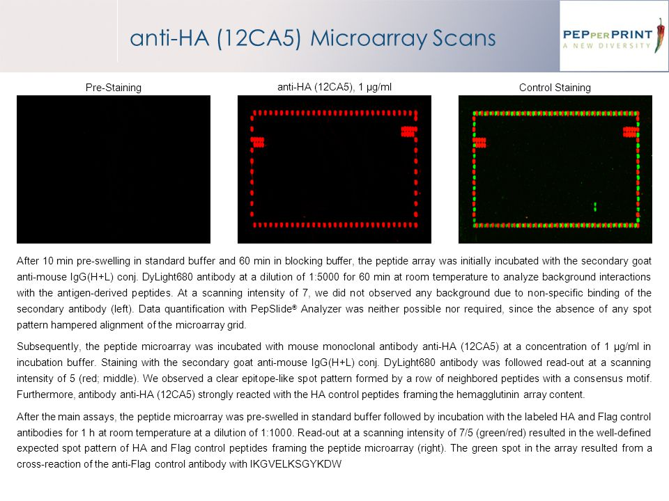 anti-HA (12CA5) Microarray Scans After 10 min pre-swelling in standard buffer and 60 min in blocking buffer, the peptide array was initially incubated with the secondary goat anti-mouse IgG(H+L) conj.