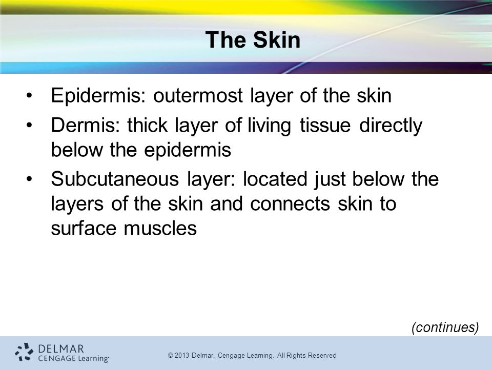 © 2013 Delmar, Cengage Learning. All Rights Reserved The Skin Epidermis: outermost layer of the skin Dermis: thick layer of living tissue directly bel