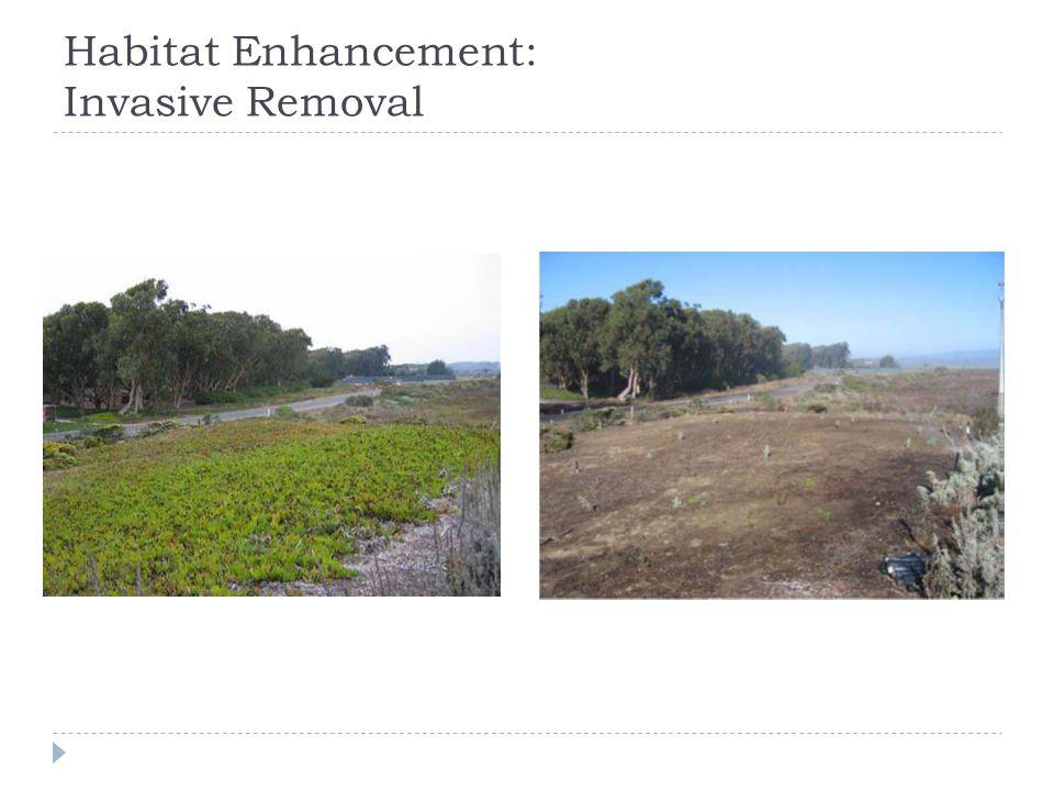 Habitat Enhancement: Invasive Removal