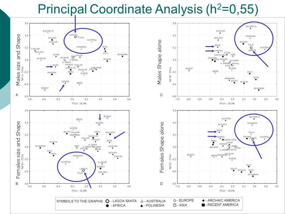 Principal Coordinate Analysis (h 2 =0,55) Males size and Shape Females Shape alone Females size and Shape Males Shape alone