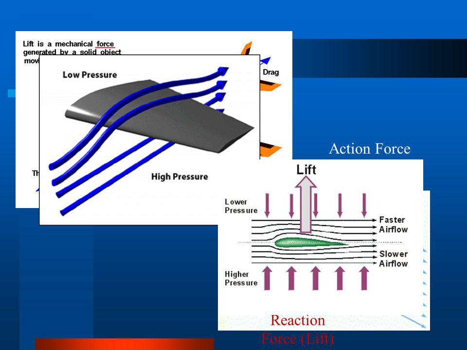 Action Force (Gravity) Reaction Force (Lift)