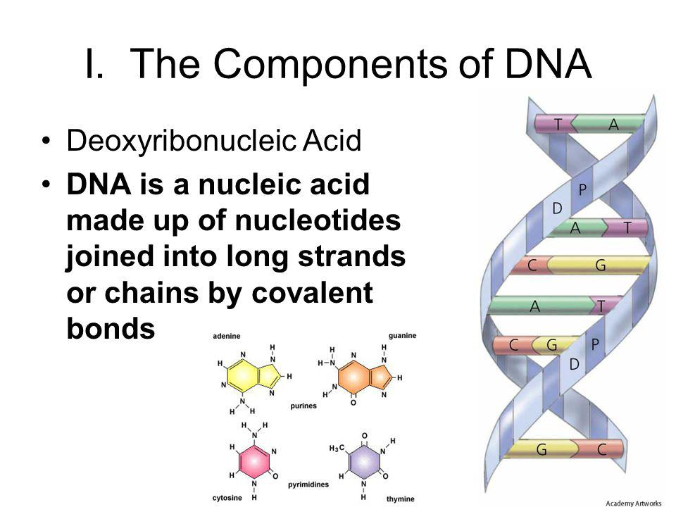 I. The Components of DNA Deoxyribonucleic Acid DNA is a nucleic acid made up of nucleotides joined into long strands or chains by covalent bonds