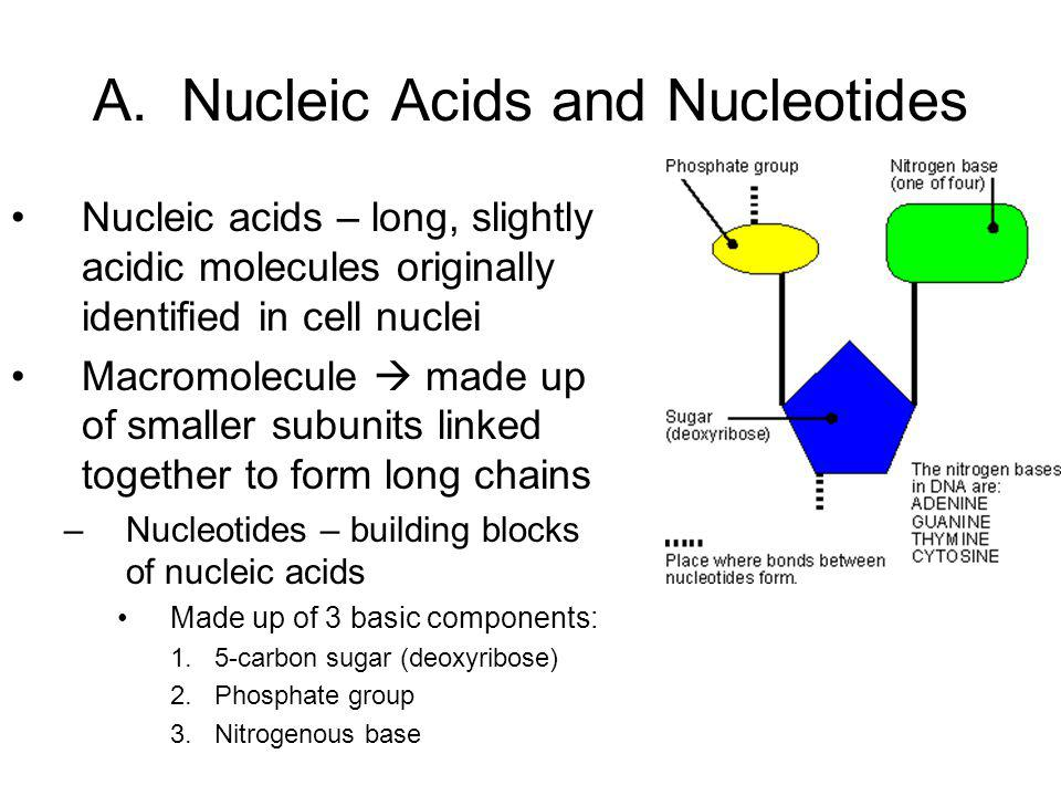 A. Nucleic Acids and Nucleotides Nucleic acids – long, slightly acidic molecules originally identified in cell nuclei Macromolecule  made up of small