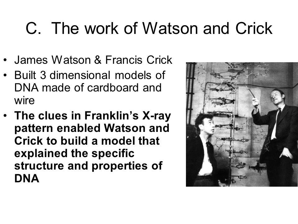 C. The work of Watson and Crick James Watson & Francis Crick Built 3 dimensional models of DNA made of cardboard and wire The clues in Franklin's X-ra