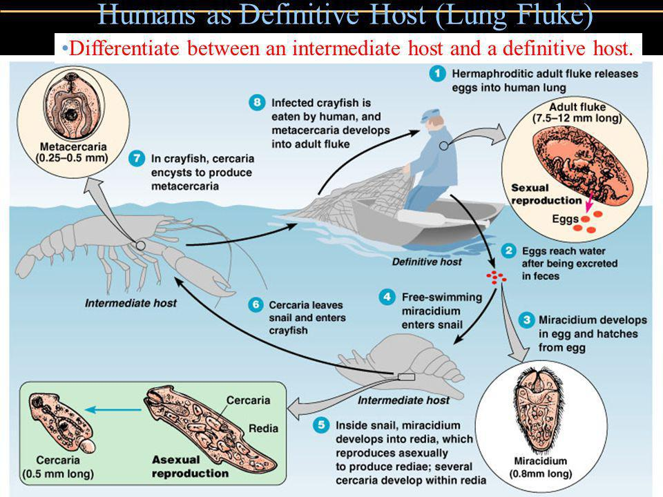 Copyright © 2004 Pearson Education, Inc., publishing as Benjamin Cummings Humans as Definitive Host (Lung Fluke) Figure 12.26 Differentiate between an intermediate host and a definitive host.