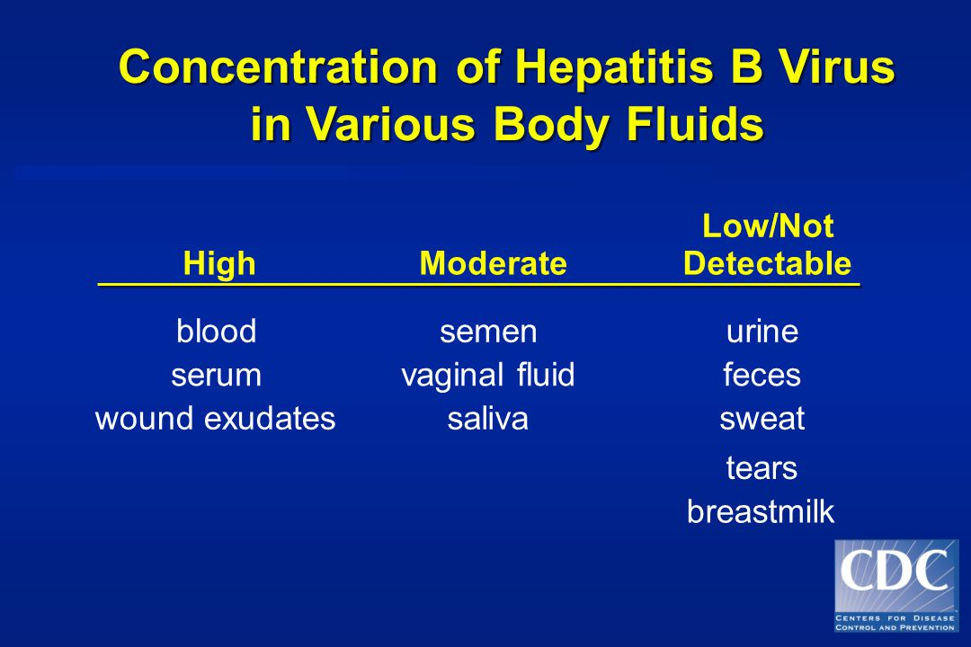Concentration of Hepatitis B Virus in Various Body Fluids Concentration of Hepatitis B Virus in Various Body Fluids HighModerate Low/Not Detectable bloodsemenurine serumvaginal fluidfeces wound exudatessalivasweat tears breastmilk