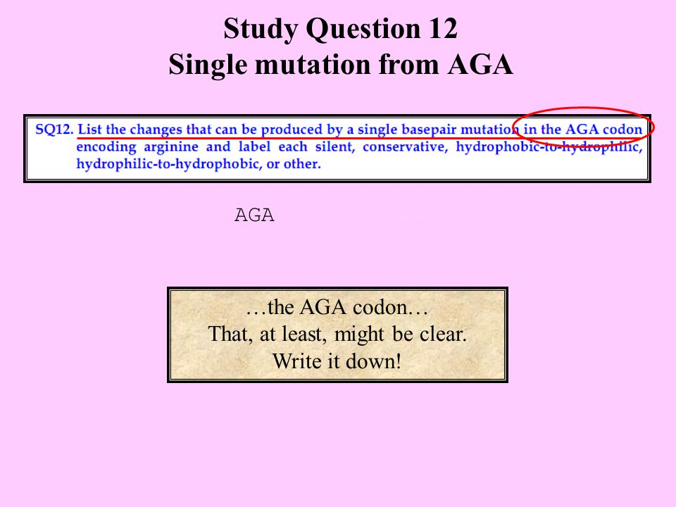 Study Question 12 Single mutation from AGA …the AGA codon… That, at least, might be clear.