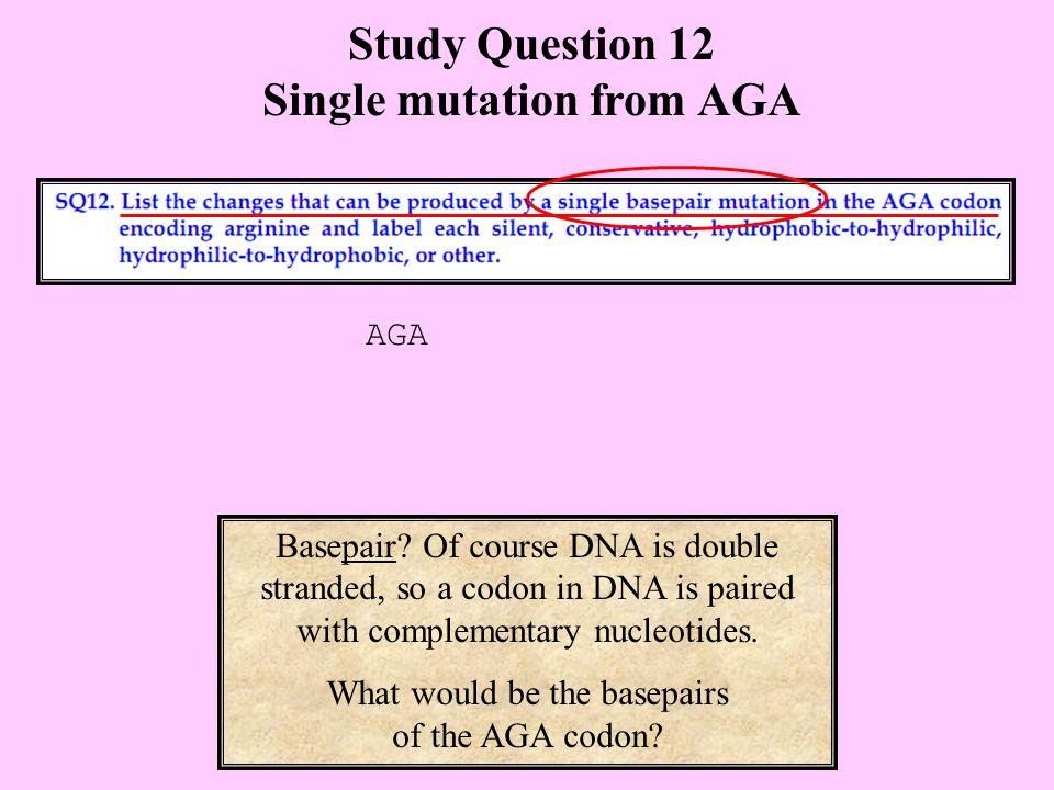 Study Question 12 Single mutation from AGA Basepair.