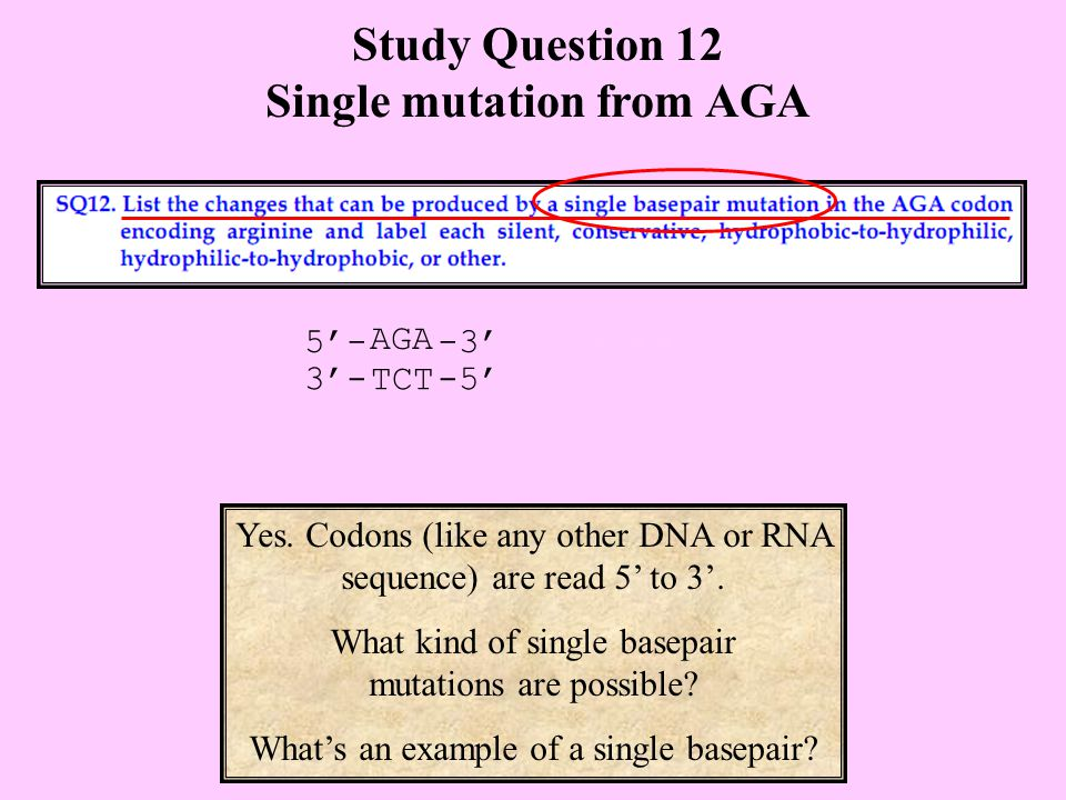 Study Question 12 Single mutation from AGA Yes.