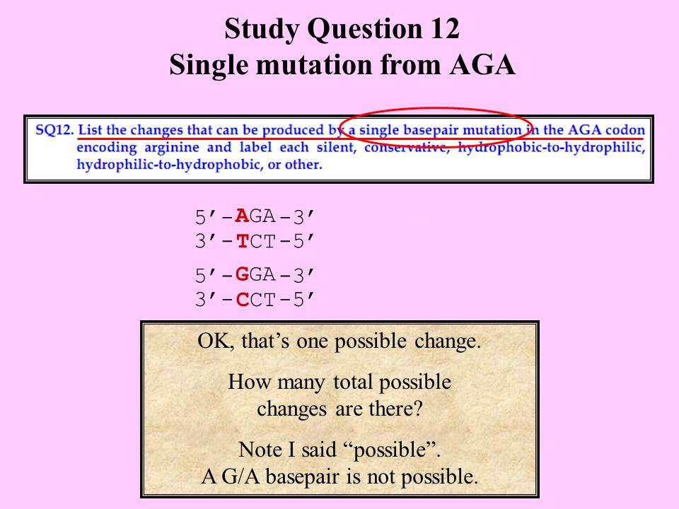 Study Question 12 Single mutation from AGA OK, that's one possible change.
