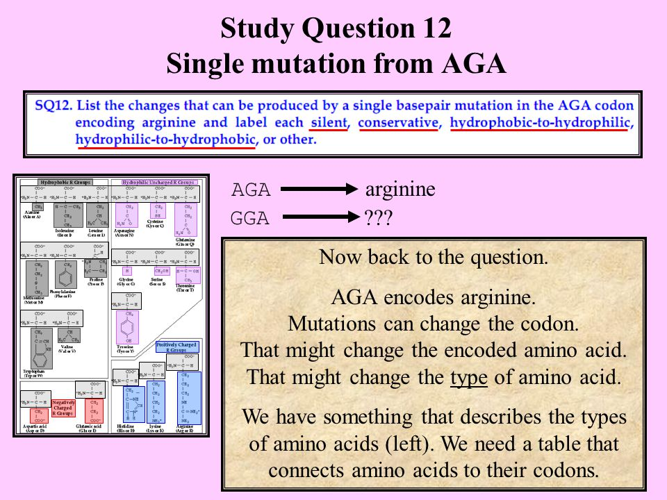 Study Question 12 Single mutation from AGA Now back to the question.