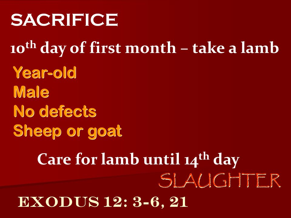 Exodus 12: 3-6, 21 10 th day of first month – take a lamb SACRIFICE Care for lamb until 14 th day Year-old Male No defects Sheep or goat Year-old Male No defects Sheep or goat SLAUGHTER