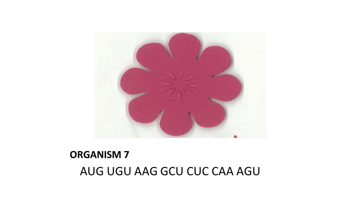 ORGANISM 7 AUG UGU AAG GCU CUC CAA AGU