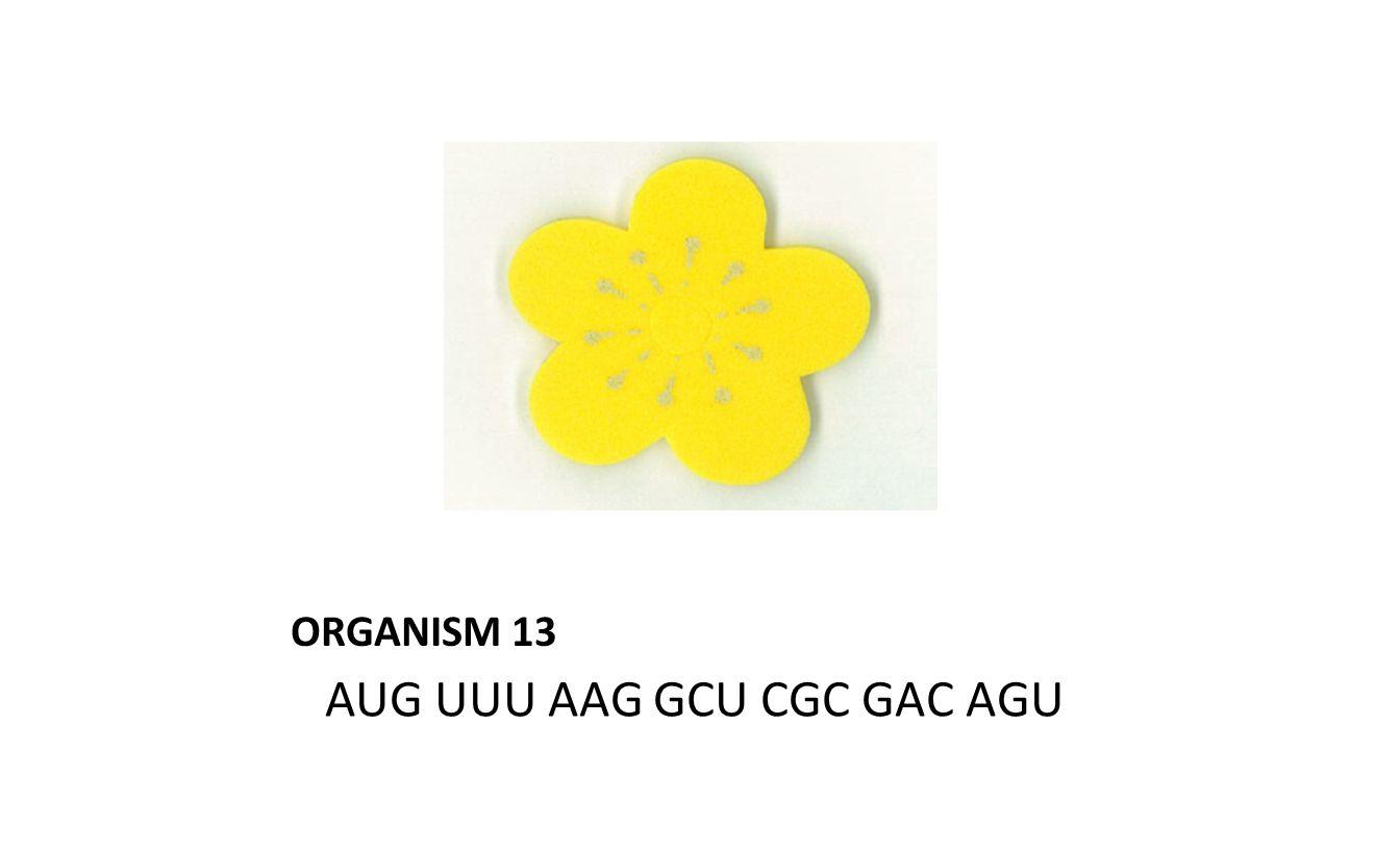 ORGANISM 13 AUG UUU AAG GCU CGC GAC AGU