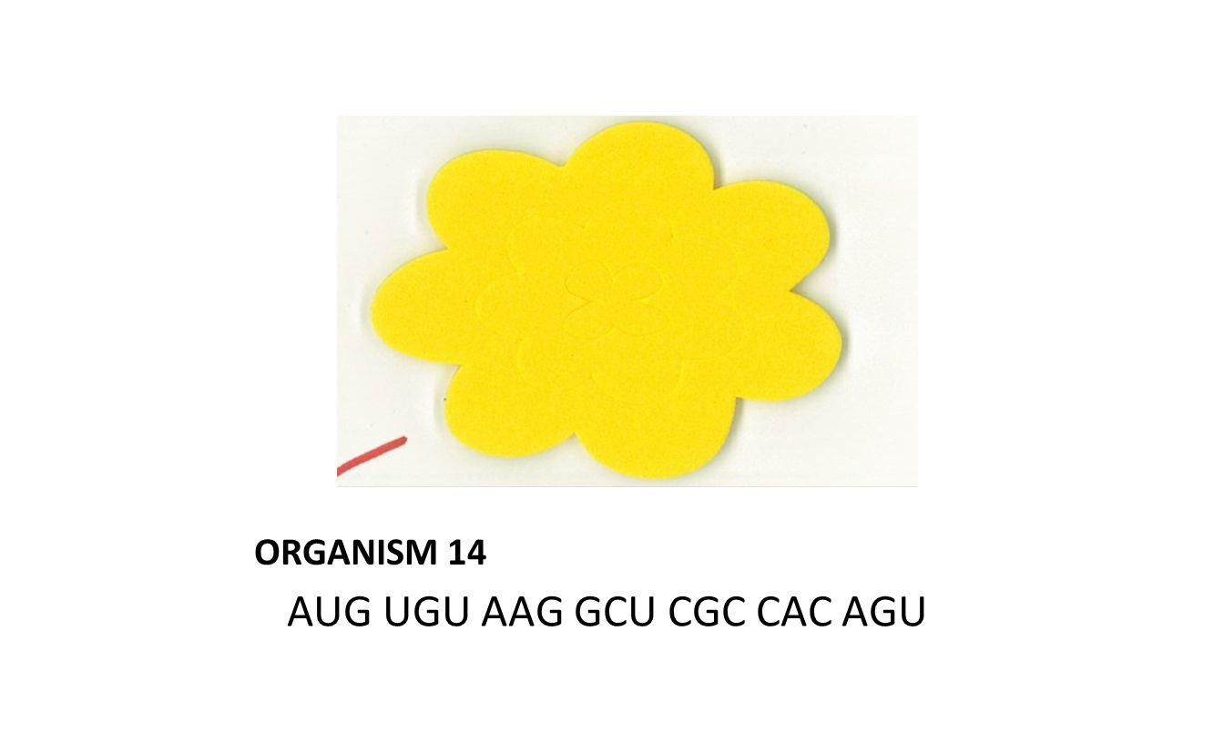 ORGANISM 14 AUG UGU AAG GCU CGC CAC AGU