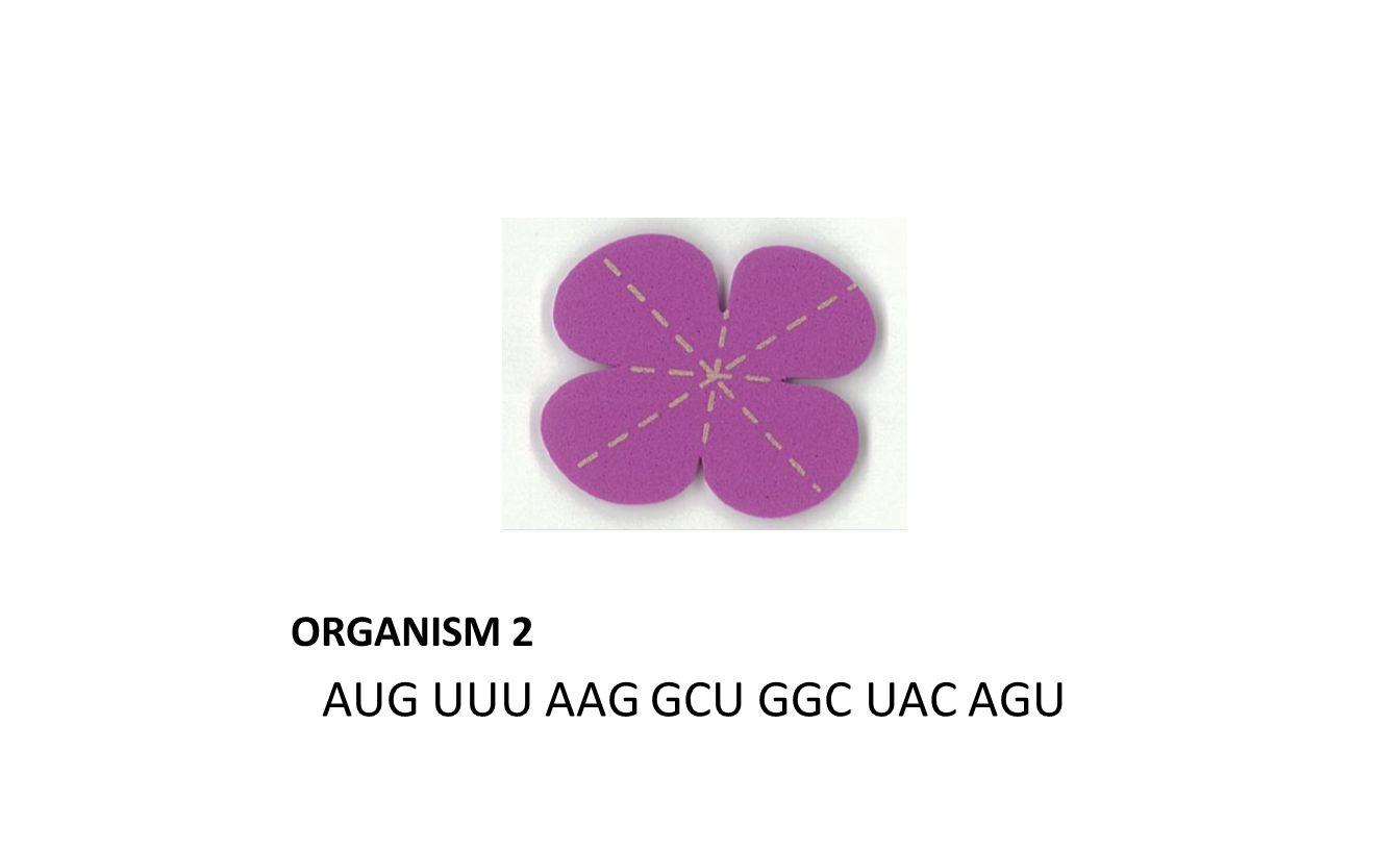 ORGANISM 2 AUG UUU AAG GCU GGC UAC AGU