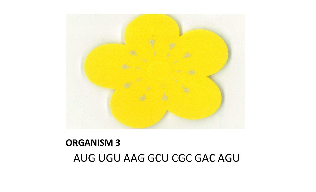ORGANISM 3 AUG UGU AAG GCU CGC GAC AGU