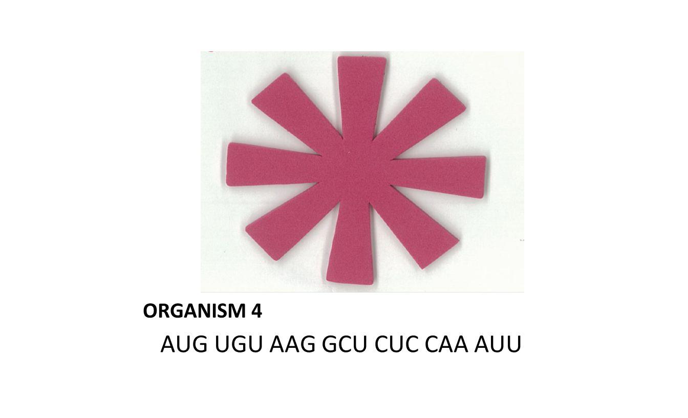 ORGANISM 4 AUG UGU AAG GCU CUC CAA AUU